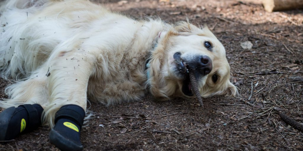 do dogs need boots for hiking?
