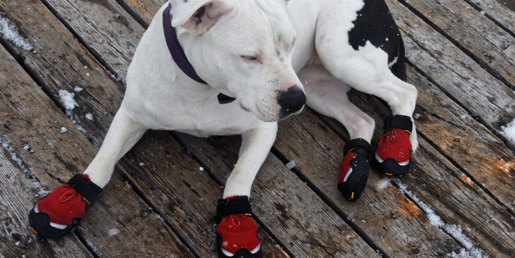 do dogs need shoes for hiking